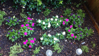 Over-watered plants
